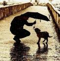 โรคที่มักเจอในสุนัขช่วงหน้าฝน