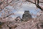ปราสาทญี่ปุ่นกับดอกซากุระ บรรยากาศอันแสนงดงามกับความเป็นมาอันน่าเศร้า