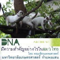 DNA สำคัญอย่างไรในแมวไทย