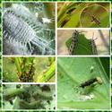 สมุนไพรไล่แมลงศัตรูพืช คุณทำเองได้ !!!