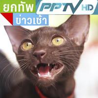 แมวไทยที่ใกล้สูญพันธุ์ แมวศุภลักษณ์