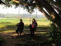 ชิงช้า เสน่ห์ของต้นไม้ให้ร่มเงา โดย อึ้งเข่งสุง เรื่อง-ภาพ