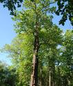 สาละวินเดือด โดย อินทรี ดำ  ตอน 3. บันทึกประวัติศาสตร์การทำไม้สักเถื่อนครั้งใหญ่ที่สุดในโลก