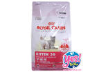 Royal canin  Kitten 36  2 kg สำหรับลูกแมว อายุ 4 ถึง 12 เดือน แม่แมวตั้งท้องและให้นมลูก ย่อยง่าย เคี้ยวง่าย ช่วยขัดฟัน