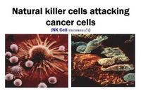 ทรานสเฟอร์ แฟกเตอร์ ต้านมะเร็งได้อย่างไร