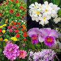 ทำอย่างไรให้ไม้ออกดอกได้ง่าย???