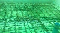 จำหน่ายลูกกบ ขายลูกกบ ลูกกบ ขาย ลูกอ็อดขายลูกกบ ขายลูกปลาดุก 0863146057 เกรียงไกร 0890852945 คุณเดือน