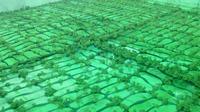 ฟาร์ม กบ INTERFROG ฟาร์ม ในฟาร์ม ลูกกบ ขายลูกกบ ขายลูกปลาดุก 0863146057 เกรียงไกร 0890852945 คุณเดือน
