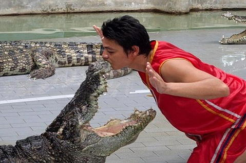 10.Tiger Crocodile Farm Pattaya.2 (479X319)