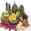 การควบคุมผลผลิตพืชผลไม้ให้เติบโตผลสวยส่งออกขายต่างประเทศได้
