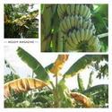 เรื่องกล้วยๆ........แต่ไม่กล้วย !!!