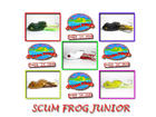 �����͡� SCUM FROG JUNIOR