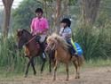 ฝึกขี่ม้าไทย(บักจ้อน)ที่ม.เกษตรกำแพงแสน      โดยธงชัย เปาอินทร์  เรื่อง-ภาพ