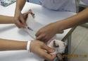 วัคซีนเข็มแรกของลูกแมว