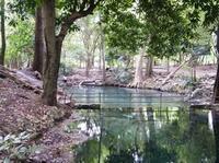 น้ำพุธรรมชาติ ที่อุทยานเขาใหญ่