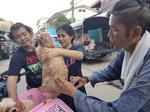 บริการฉีดวัคซีนสุนัขและแมว