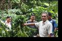โครงการส่งเสริมการปลูกกาแฟสายพันธุ์ดี ประจำปี 2556