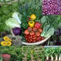 การปลูกพืชอายุสั้นให้ได้ผลผลิตสุง ทำอย่างไร
