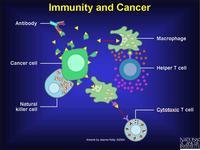 ภูมิคุ้มกันของร่างกายที่ส่งผลต่อมะเร็ง (Tumor Immunology)