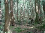 �อาโอกิกาฮาระ� ป่าอาถรรพ์กับมุมมองเรื่องการฆ่าตัวตายของคนญี่ปุ่น
