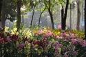 ดอกไม้เทศและดอกไม้ไทย  ต้น 47.ลิลี่