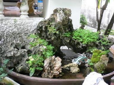 สวนถาดน้ำ   สูง  50 cm.