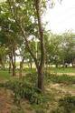 ต้นไม้ทุกต้นคืนอินทรียวัตถุสู่ดิน