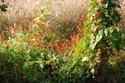 ดอกไม้เทศและดอกไม้ไทย ต้นที่ 6.