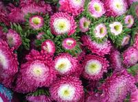 รวมรูปภาพดอกไม้