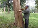 ข้อเท็จจริงเกี่ยวกับไม้สักและไม้พะยูง ระวังจะถูกหลอกขายต้นกล้า