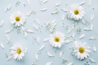 ภูมิแพ้เกสรดอกไม้...บรรเทาได้ด้วยเคล็ดลับจากท้องทะเล