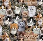 ผ้าคอตตอนอเมริกา Fat Quarter Petpourri Cats And Kittens 3802 รูปแมว ขนาด 1/4 หลา