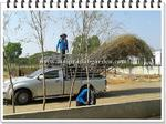 จัดส่งต้นหลิวลู่ลม เดอะโบนันซ่ารีสอร์ทเขาใหญ่ (The Bonanza Resort Khao Yai)