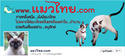 ติดความเคลื่อนไหว..แมวไทย.com ที่ facebook