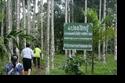 โครงการส่งเสริมการปลูกกาแฟฯ 2555