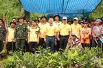 กิจกรรม โครงการปลูกป่าเฉลิมพระเกียรติ ประจำปี 2561
