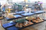 เทศบาลเมืองลัดหลวง ร่วมกับมูลนิธิ Soi Dog เปิดให้บริการทำหมันสุนัขฟรี!