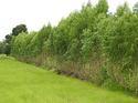 แนวคิด ออป.ปลูกป่าผสมผสานเพื่อการเข้าถึงวิถีชีวิตชาวบ้านได้อย่างไร
