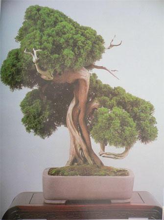 bonsaibaan 0217