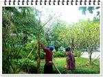 จัดส่งไม้พร้อมปลูก(หมู่บ้านสวนธน ซ.รัตนาธิเบศร์ 28 จ.นนทบุรี)