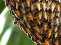 น้ำผึ้ง สุดยอดอาหารและยา  โดยดร.พรชัย ปรีชาปัญญา เรื่อง-ภาพ