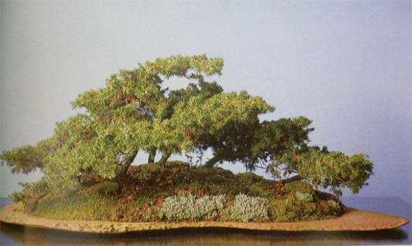 bonsaibaan 0216