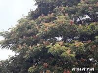 ต้นไม้ในป่า7