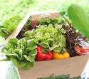 เทคนิคถนอมวิตามินในผัก