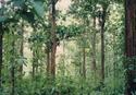 องค์การอุตสาหกรรมป่าไม้ต้องสังกัดกระทรวงเกษตรและสหกรณ์