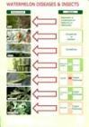 kỹ thuật trồng dưa hấu, thuốc trừ sâu, sâu bệnh