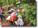 การปลูกป่าเฉลิมพระเกียรติ ตำบลปางมะผ้า ปี 2558