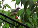 นกสีชมพูสวน โดย ธงชัย เปาอินทร์ เรื่อง-ภาพ