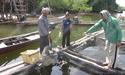 พบปลา 300 กระชังที่กระบี่ ติดเชื้อวีทีโอ-สูญนับล้าน