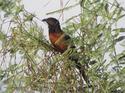 นกกระปูดตาแดงน้ำแห้งก็ตายจริงหรือ โดยธงชัย เปาอินทร์ เรื่อง-ภาพ